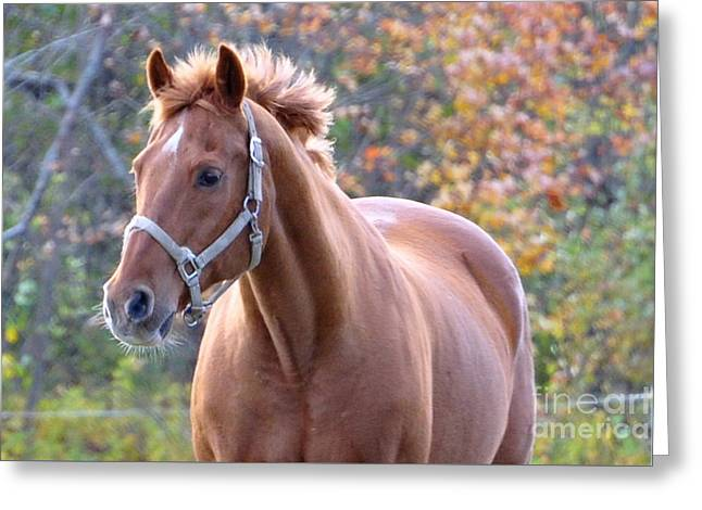 Greeting Card featuring the photograph Horse Muscle by Glenn Gordon