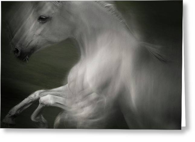 Horse Of Power Greeting Card