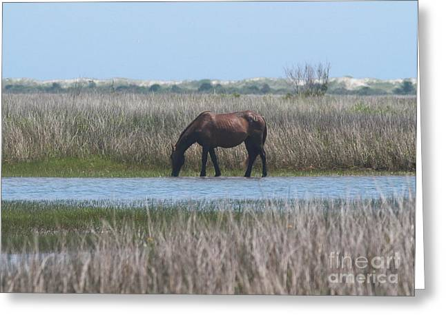 Horse Of Shackleford Banks 2 Greeting Card by Cathy Lindsey