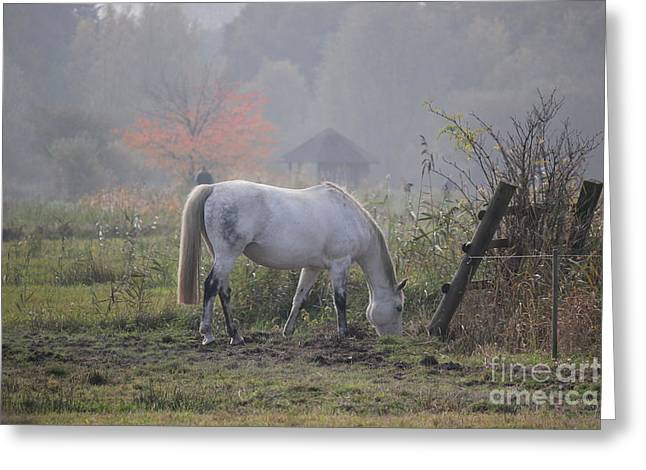 Horse On A Peaceful Day Greeting Card