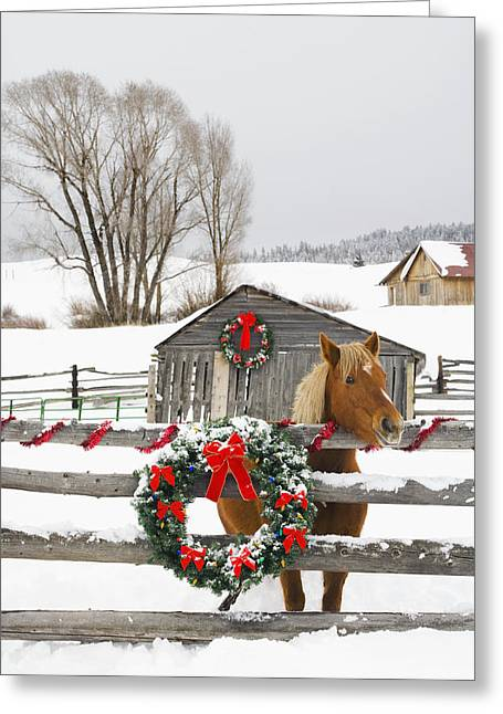 Horse On Soward Ranch Decorated For The Greeting Card