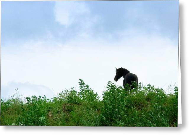 Horse On The Hill Greeting Card by Joan Davis