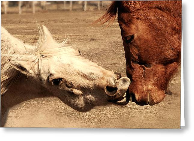 Horse Play Greeting Card by Steven Milner