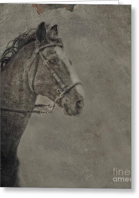 Horse Portrait Greeting Card by Kim Henderson