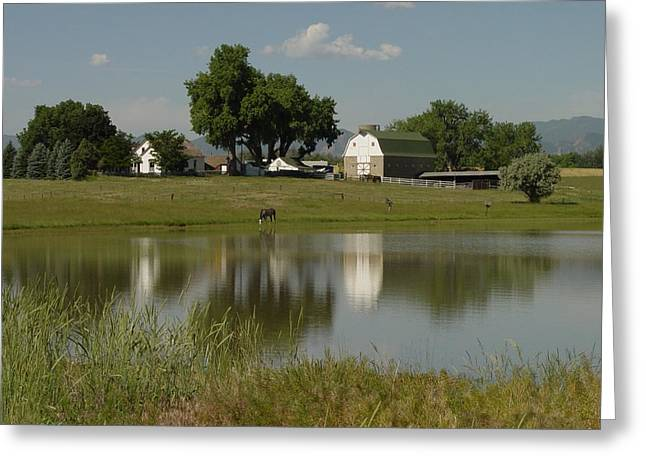 Horse Ranch Greeting Card by Stephen Schaps