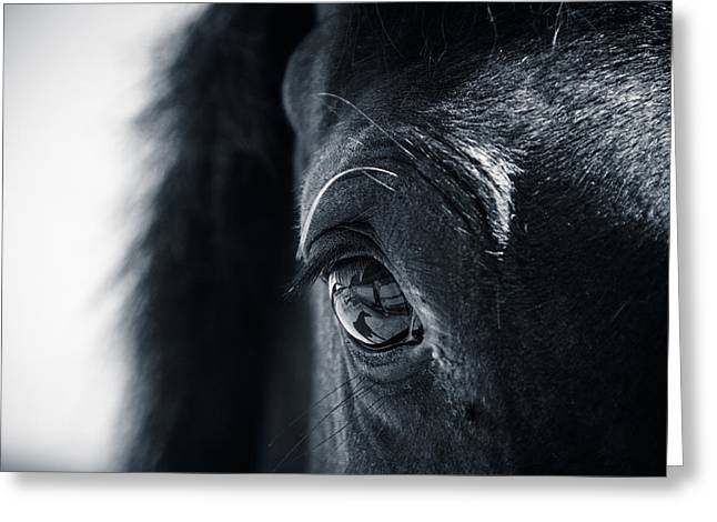 Horse Reflection Greeting Card by Michele Wright