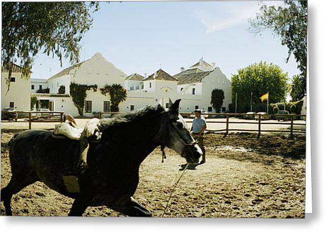 Horse Running In An Paddock, Gerena Greeting Card by Panoramic Images