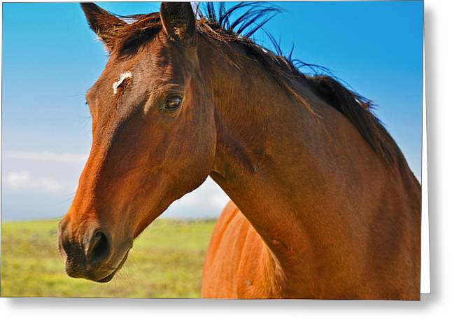Greeting Card featuring the photograph Horse by Sabine Edrissi