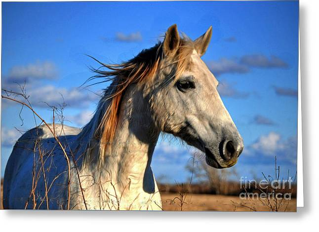 Horse Greeting Card by Savannah Gibbs