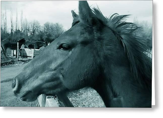 Horse Sense Greeting Card