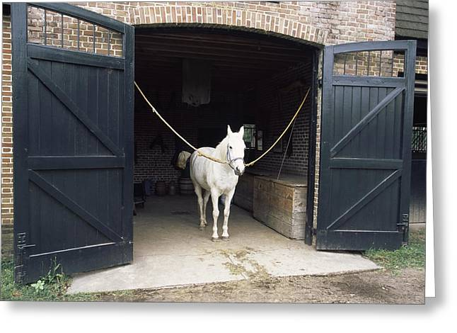 Horse Standing In A Stable, Middleton Greeting Card