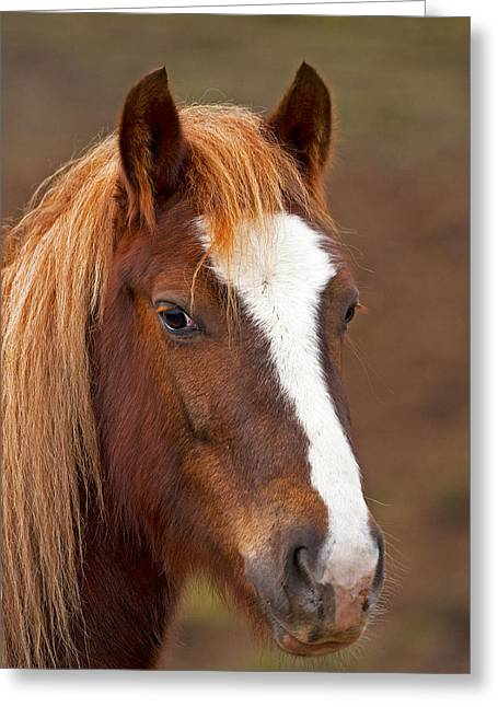 Horse Stare Greeting Card by Paul Scoullar
