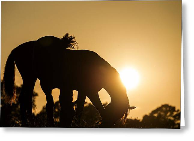 Horse Sunset Greeting Card by Michael Mogensen
