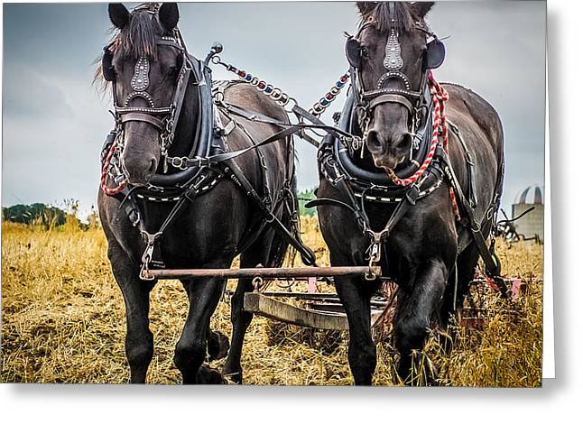 Horse Team Greeting Card by Paul Freidlund
