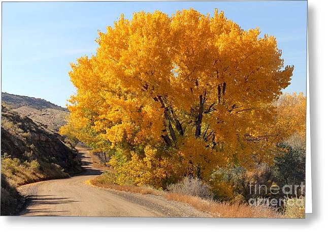 Horse Thief Canyon Gold Greeting Card