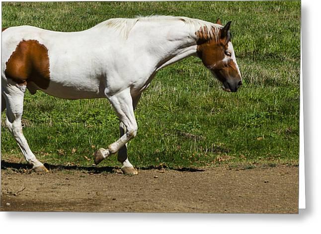 Horse Walking Greeting Card by David Millenheft