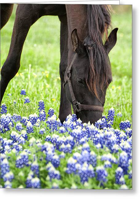 Horse With Bluebonnets Greeting Card