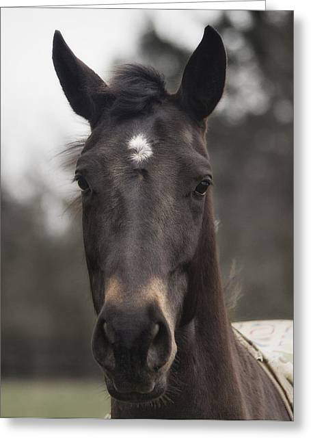 Horse With Gentle Eyes Greeting Card