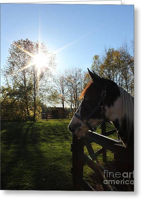 Horse With Sunburst Greeting Card