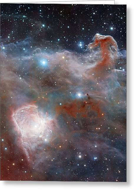 Horsehead Nebula Greeting Card by Robert Gendler