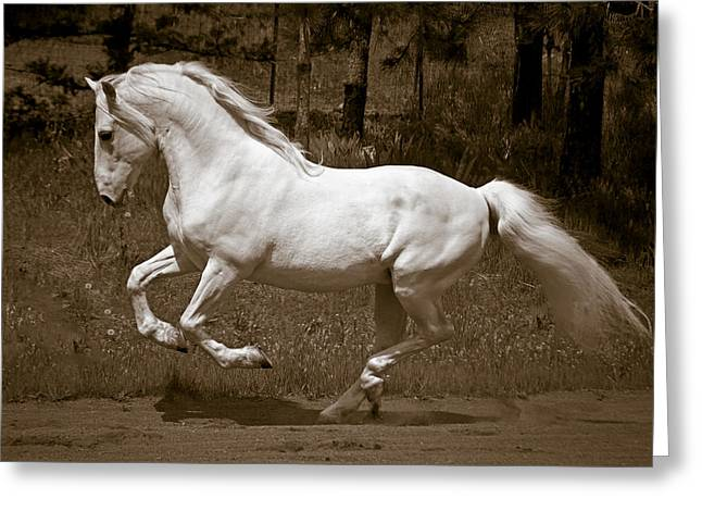 Horsepower Greeting Card by Wes and Dotty Weber