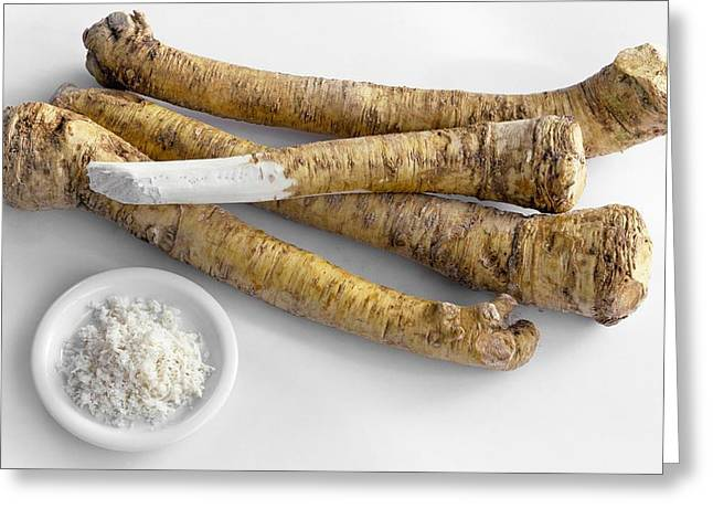 Horseradish Roots And Grated Horseradish Greeting Card by Science Photo Library