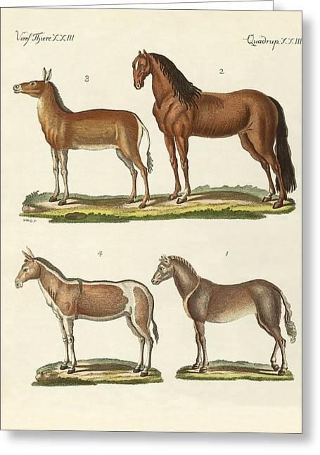 Horses And Donkeys Greeting Card