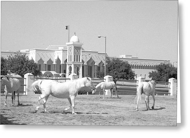 Horses And Emiri Palace Greeting Card