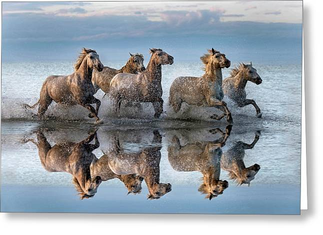Horses And Reflection Greeting Card