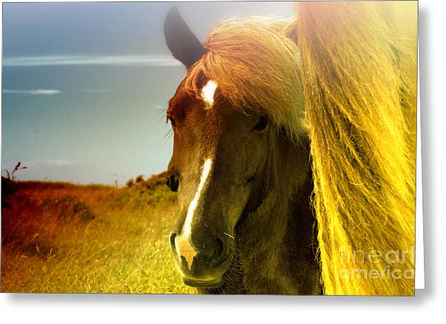 Horses Greeting Card by Astrid Lenz