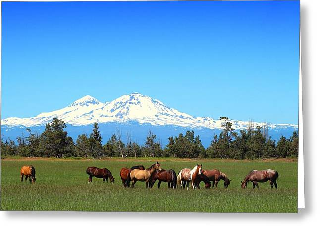 Horses At Sisters Mountain Greeting Card