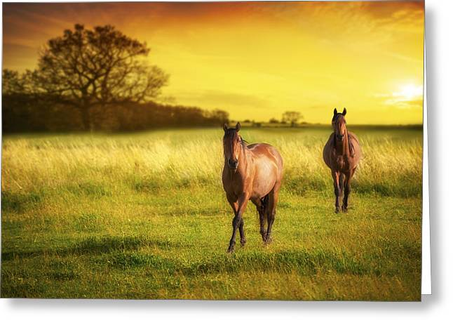 Horses At Sunset Greeting Card by Amanda Elwell