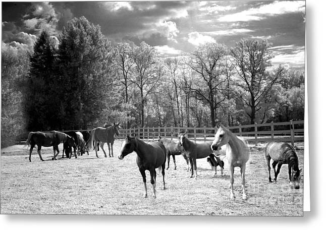 Horses Black And White Infrared - Surreal Horses Black White Nature Landscape Equine Greeting Card by Kathy Fornal