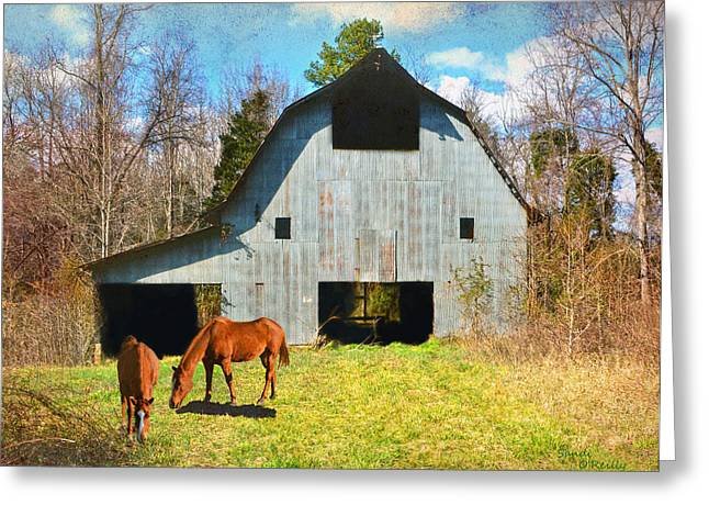 Horses Call This Old Barn Home Greeting Card by Sandi OReilly