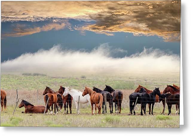 Horses Greeting Card