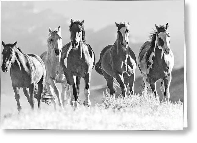 Horses Crest The Hill Greeting Card by Carol Walker