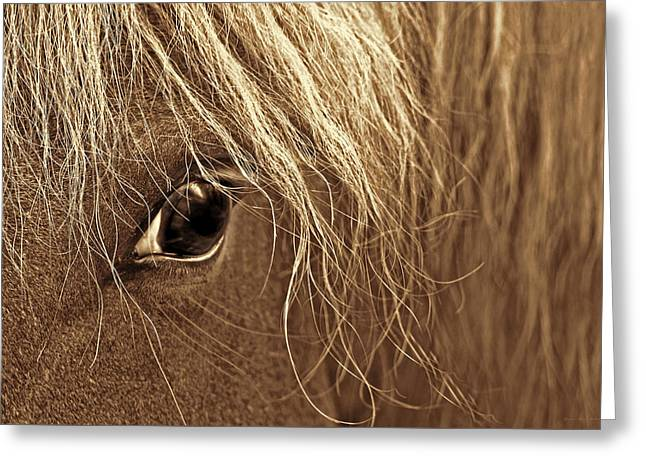 Horse's Eye Sepia Greeting Card by Jennie Marie Schell