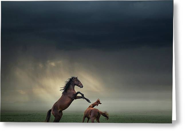Horses Fight Greeting Card