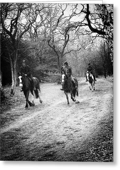 Horses Galloping Greeting Card by David Durham