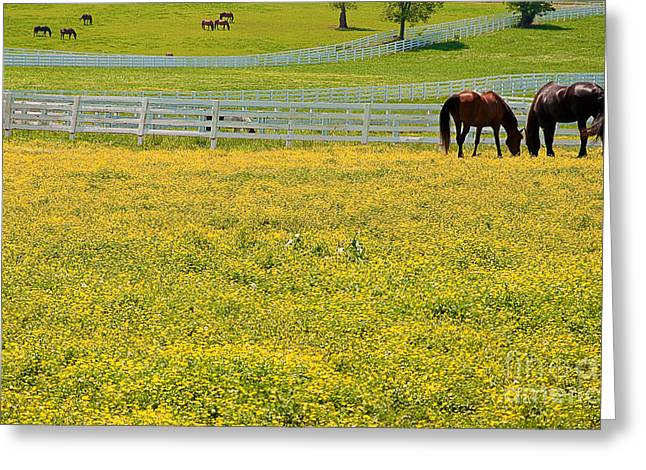 Horses Grazing In Field Greeting Card