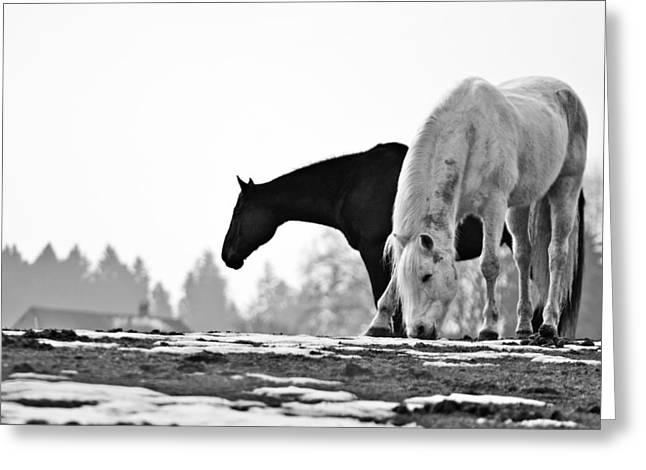 Horses Grazing Greeting Card