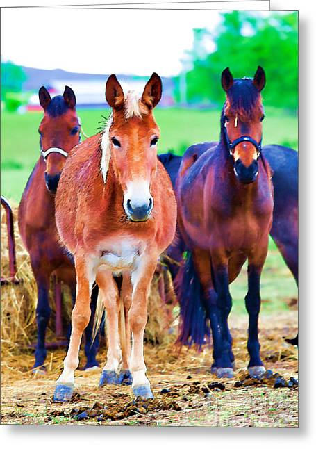 Horses Horses Greeting Card by Carolina Mendez