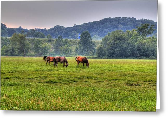 Horses In A Field 2 Greeting Card by Jonny D