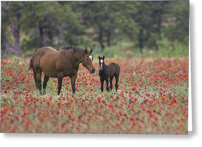 Horses In A Field Of Texas Wildflowers 2 Greeting Card by Rob Greebon