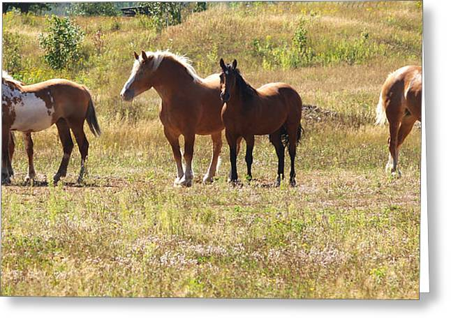 Horses In A Field Greeting Card by Susan Crossman Buscho