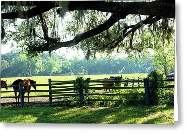 Horses In A Ranch, Hobeau Farms Barn Greeting Card by Panoramic Images