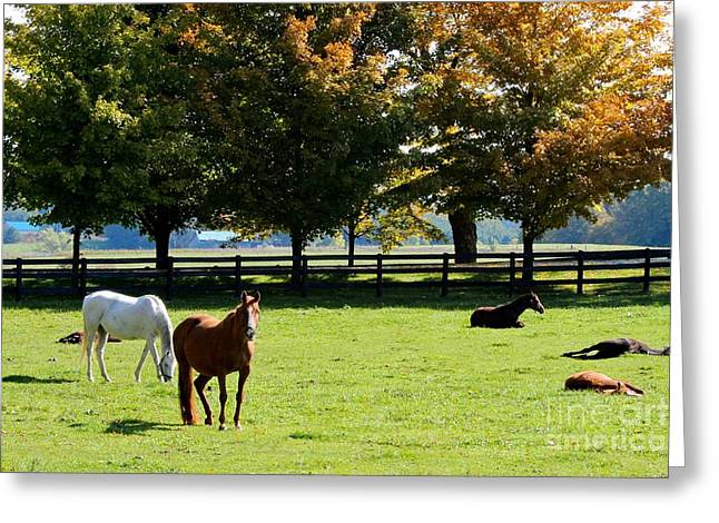 Horses In Fall Greeting Card