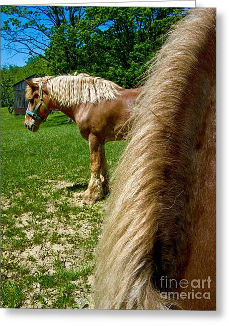 Horses In Meadow Greeting Card by Amy Cicconi