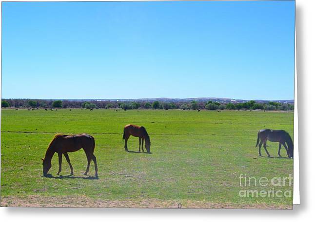 Greeting Card featuring the photograph Horses In New Mexico by Utopia Concepts