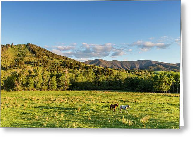 Horses In Pasture In The Foothills Greeting Card